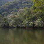 Jureia Itatins –  Rio Verde