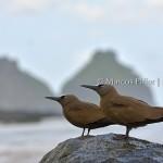 Noronha 2017 | Vila dos Remédios e fauna
