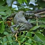 Anavilhanas | plantas e animais