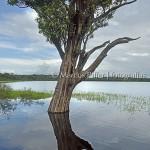 Parna Jaú | Lago Uruá