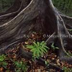 Anavilhanas | Igapó, árvores e raízes