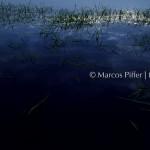 Anavilhanas | Lago do Arraia